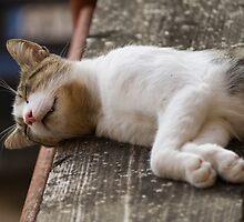 cute cat by spetenfia