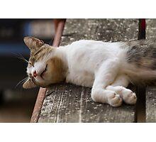 cute cat Photographic Print