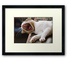 cute cat Framed Print