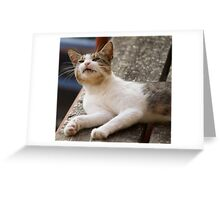cute cat Greeting Card