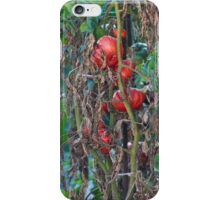 tomatoes in the garden iPhone Case/Skin