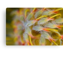 Soon to Bloom Canvas Print