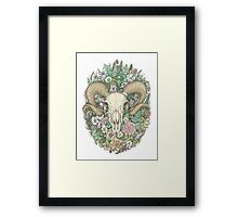 Life's Mystery: Ram Skull. Colored Version Framed Print