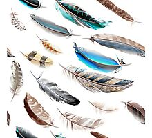 Cute artistic feathers collection : blue and brown Photographic Print