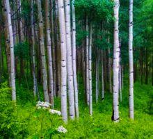 The Aspen Forest Sticker