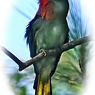 RED BEARDED BEE EATER PORTRAIT by NICK COBURN PHILLIPS