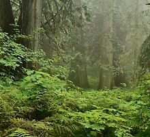 Primeval forest by Darbs