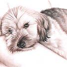 Dogs Eyes II by Nicole Zeug