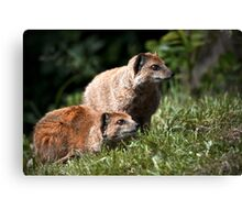 Closer To An Animal Canvas Print