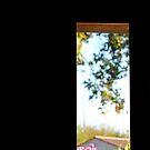 Kitchen window by Paul Pasco