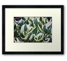 leaf in spring Framed Print