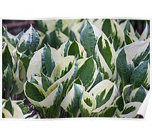 leaf in spring Poster