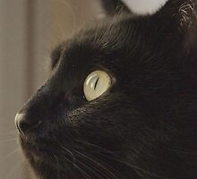 Black Cat Profile by Louise Fahy
