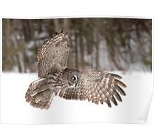 Great grey owl in flight over a snow covered field Poster