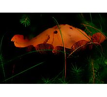 Fungus in the Black Forest.......... Photographic Print