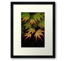 Autumn Appears Framed Print