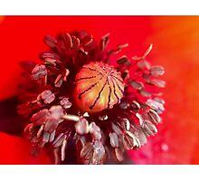 Cercles, ronds, et sphères - Photo n°1 Photographic Print