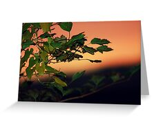 Sunset through the leaves Greeting Card