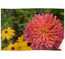Colorful Garden Flower Poster