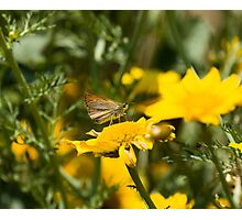 Small Skipper Butterfly on Lesvos Photographic Print