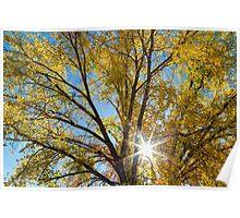 Cottonwood Sunshine Poster