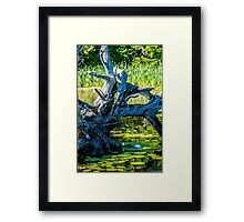 Beauty in the Shadows Framed Print
