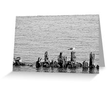 Gull and Pilings BW Greeting Card