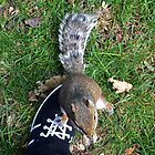 Theres a Squirrel on my foot............. by lynn carter