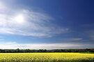 Sun Halo Over Canola Field by EOS20