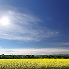 Sun Halo Over Canola Field by EOS20