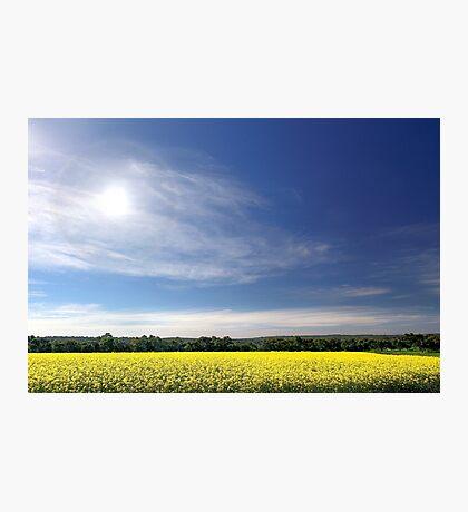 Sun Halo Over Canola Field Photographic Print