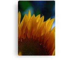 sun flower petals Canvas Print