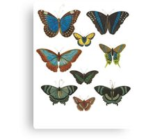 Butterflies- a beautiful collecton from Albertus Seba Canvas Print