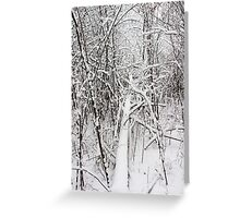 Snowy Forest 13 Greeting Card