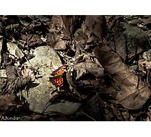A Bit of Fall Brightness - Butterfly Photographic Print