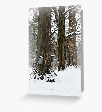 Maple Sugaring Time Greeting Card
