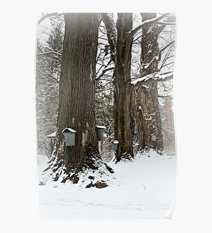 Maple Sugaring Time Poster