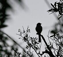 Birdy by emilymartian