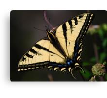 Papilio rutulus Canvas Print