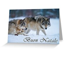 Timber Wolf Christmas Card - Italian - 17 Greeting Card