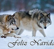 Timber Wolf Christmas Card - Spanish - 17 by WolvesOnly