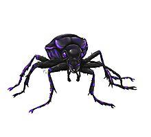 violett beetle Photographic Print
