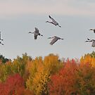 Flight of The Cranes by Todd Weeks