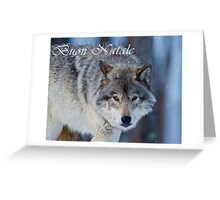 Timber Wolf Christmas Card - Italian - 18 Greeting Card