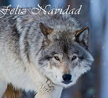 Timber Wolf Christmas Card - Spanish - 18 by WolvesOnly
