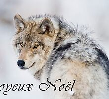 Timber Wolf Christmas Card - French - 19 by WolvesOnly