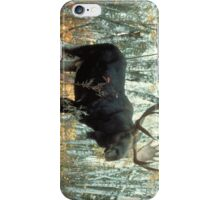 Huge Moose  iPhone Case/Skin