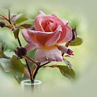 rose and buds by Joyce Knorz