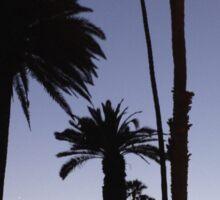 Venice, California Palm Trees Sticker