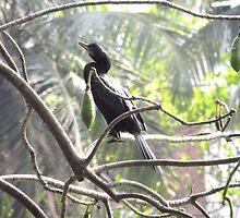Little Cormorant on a tree by Danish Sualeh